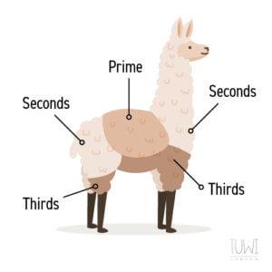 Alpaca Wool Sorting Grades Illustration